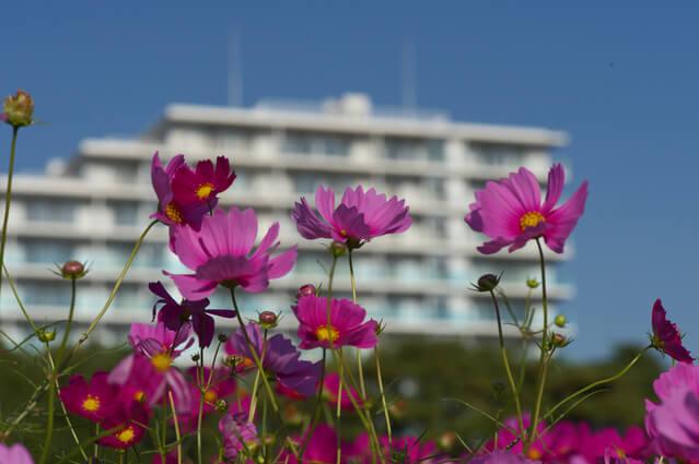 花と集合住宅のイメージ