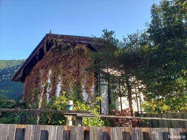空き家に伸び放題の草木
